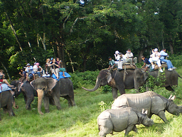 JUNGLE SAFARI PACKAGE