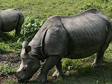 Cultural & Wild Life Safari Tour
